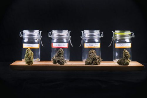 Different cannabis strain in mason jars for weed edibles