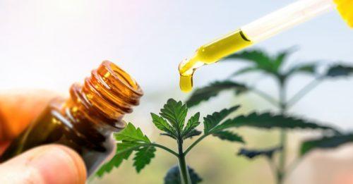 Cbd oil used as ingredient in cooking food