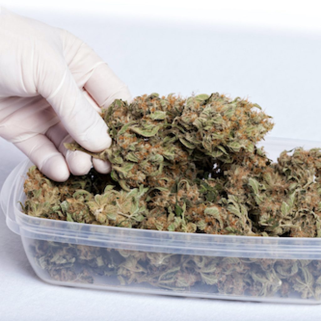 airtight cannabis container to prevent mold.