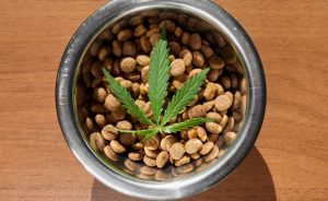 bowl of cbd oil dog food