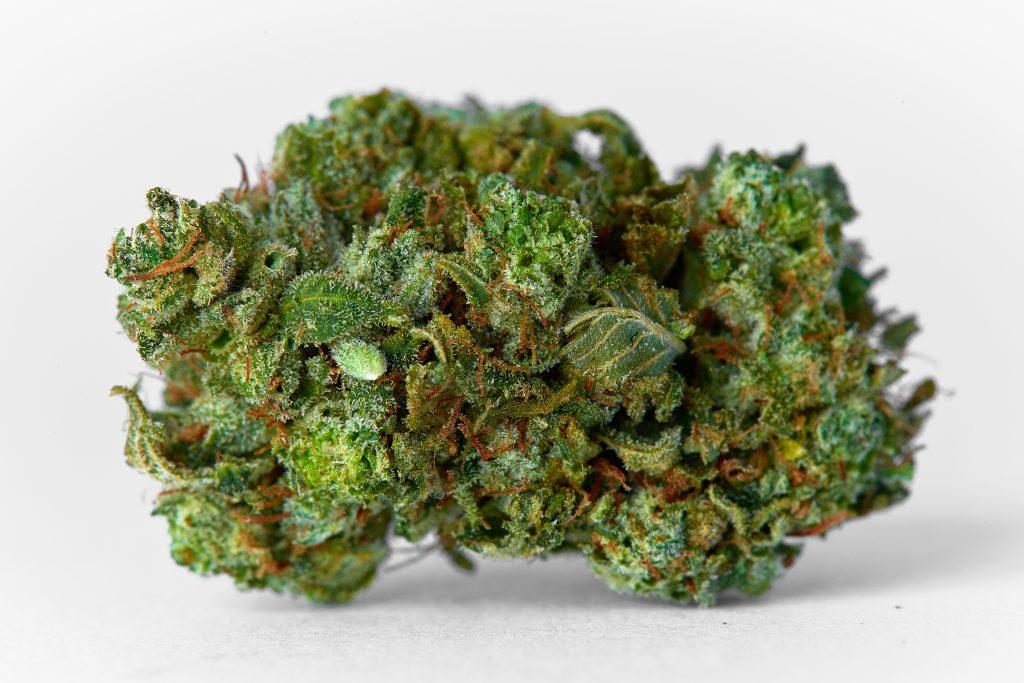 raw cannabis bud