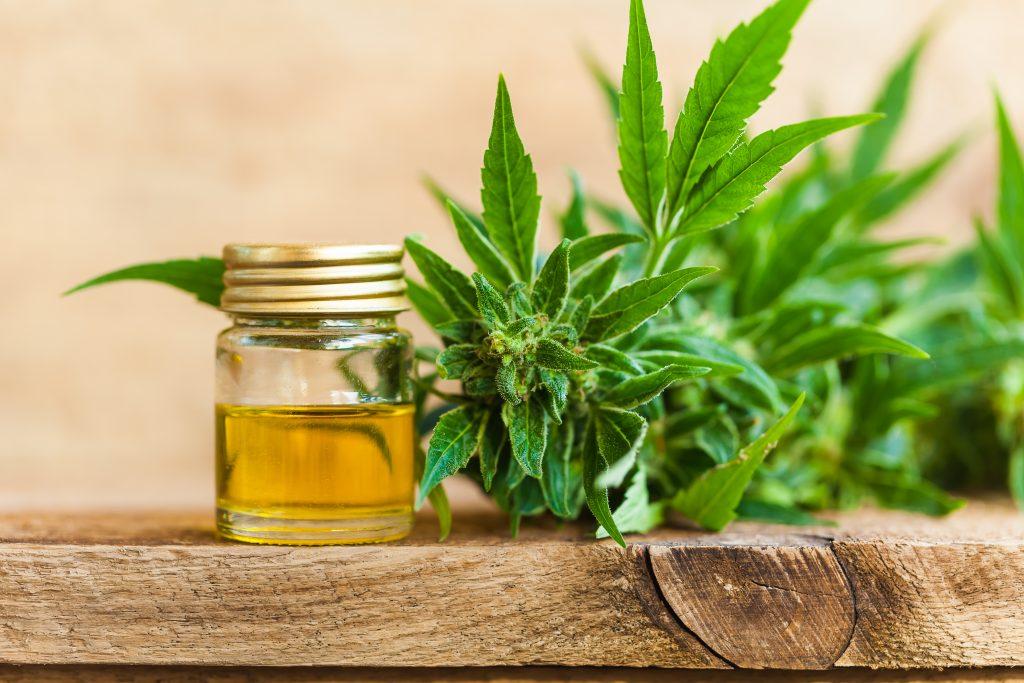 cannabis oil for hair care