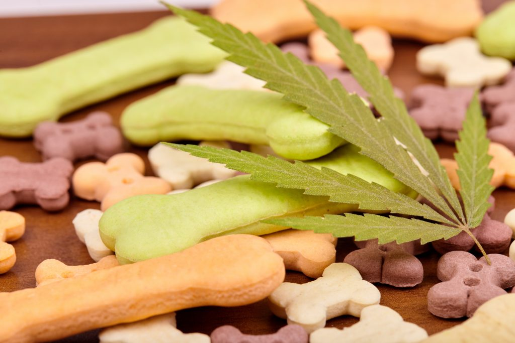 cbd pet treats collections