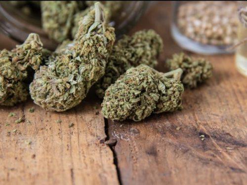 How To Make A Cannabis Perfume From Mango Kush |