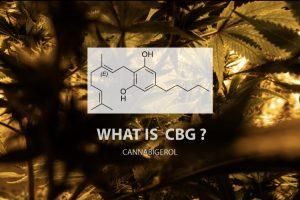 What is CBG cannabigerol
