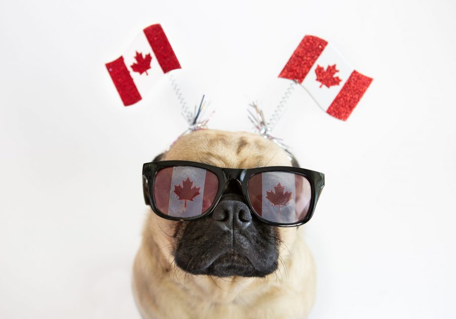 Canada-Day-Weed