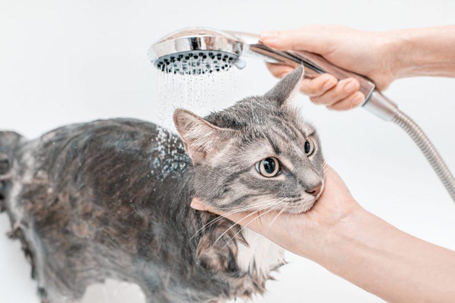 cbd-pet-shampoo