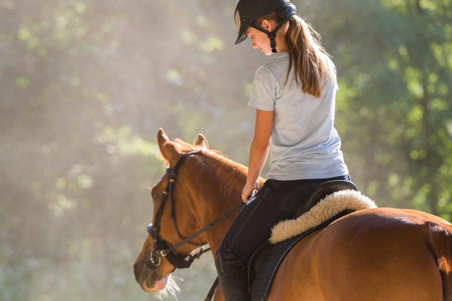 horses and cbd oil
