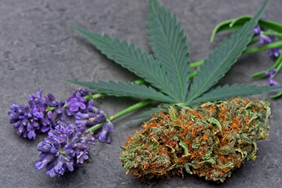 linalool-terpenes-cannabis