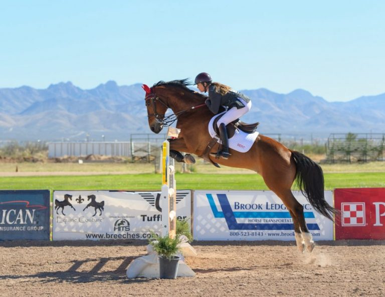 Horse Jumping CBD Oil